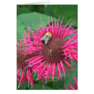 Rosa Bienen-Balsam-Blume und Honig-Biene Karte