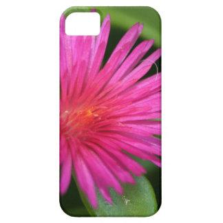 Rosa Blume des saftigen Teppich-Unkrauts iPhone 5 Hüllen