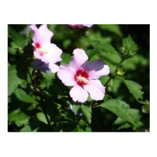 Rosa Blumen auf Grün Postkarte