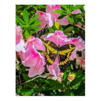 Rosa Blumen mit einem Schmetterling Entwurf Postkarte