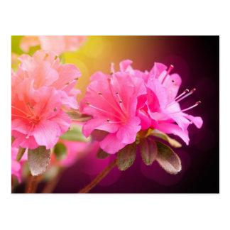 Rosa Blumen Postkarte