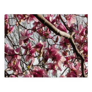Rosa Blüten Postkarte