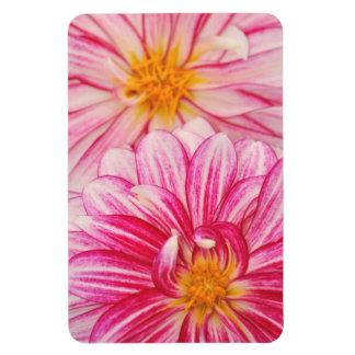 Rosa Dahlie-Blumenmagnet Magnet