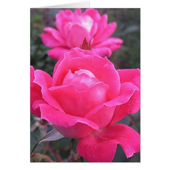 Rosa Doppeltes - Rosen Grußkarte