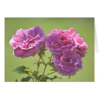Rosa elegante Rosen Karte