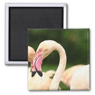 Rosa Flamingo-Magnet Quadratischer Magnet