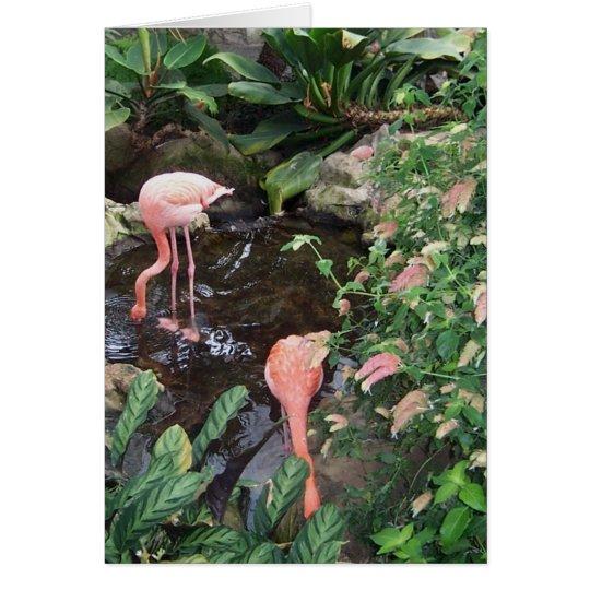 Rosa Flamingos Grußkarte