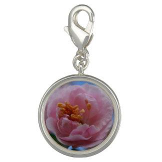 Rosa Frühlings-Blüte Charm