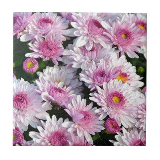 Rosa Frühlingschrysantheme-Blumen Kleine Quadratische Fliese