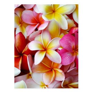 Rosa gelbe weiße Mischplumeria-Blume Postkarte