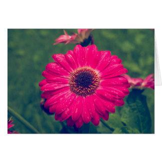 Rosa Gerbera-Gänseblümchen in der Blüte Karte