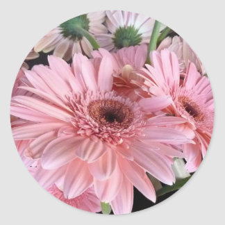 rosa Gerberas Runder Aufkleber