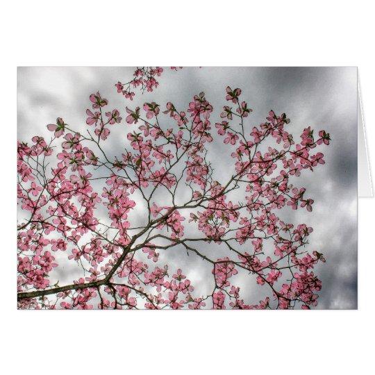 Rosa Hartriegel-Baum im Frühjahr Grußkarte