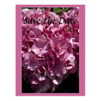 Rosa Hydrangea, der Save the Date Postkarte