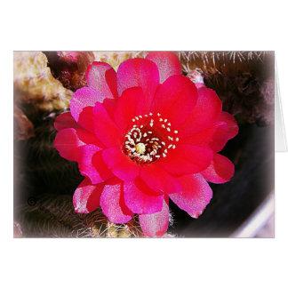 Rosa Kaktus-Blüte Karte
