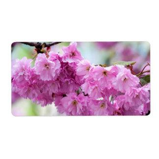 Rosa Kirschblüte-Kirsche