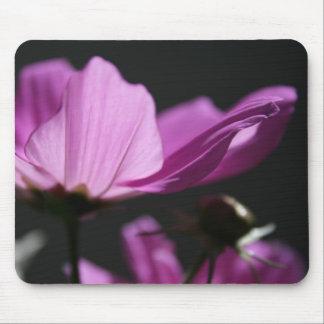 Rosa Kosmos in der Blumenphotographie Mousep der Mauspads