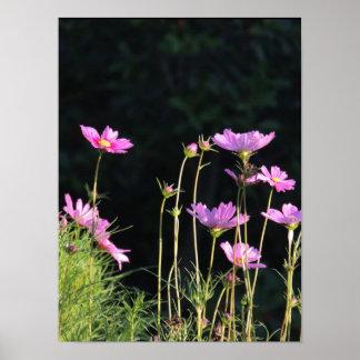 Rosa Kosmos morgens Sun Poster