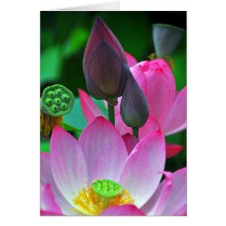 Rosa Lotus-Blüten Grußkarte