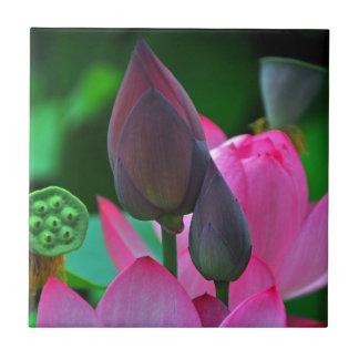 Rosa Lotus-Blüten Kleine Quadratische Fliese