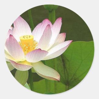 Rosa Lotus-Entwurf Runder Aufkleber