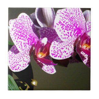 Rosa Orchideen 1 Kleine Quadratische Fliese