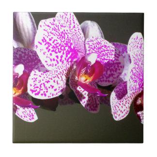 Rosa Orchideen 2 Kleine Quadratische Fliese