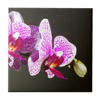 Rosa Orchideen 3 Kachel