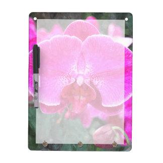 Rosa Orchideen-Blume, Blumenphotographie Trockenlöschtafel