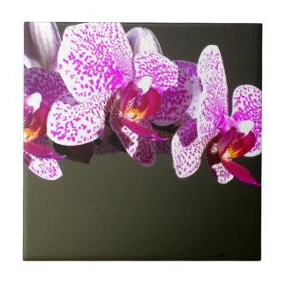 Rosa Orchideen Kleine Quadratische Fliese