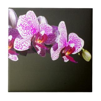 Rosa Orchideen Keramikfliesen