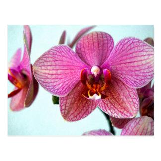Rosa Orchideen Postkarte