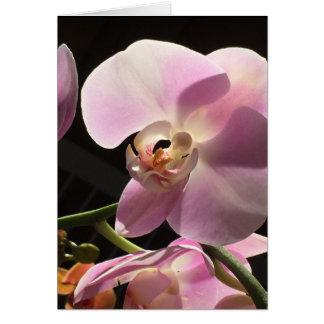 Rosa Orchideen-Raum-innere Karte