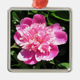 Rosa Pfingstrose Quadratisches Silberfarbenes Ornament