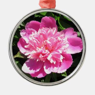 Rosa Pfingstrose Rundes Silberfarbenes Ornament