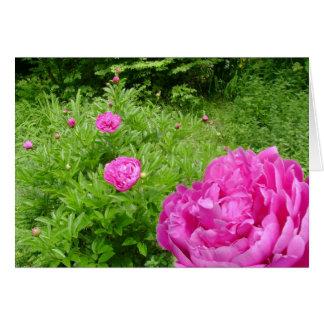 Rosa Pfingstrosen-Garten Grußkarte