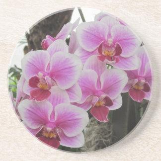 Rosa Phalaenopsis-Orchideen-Untersetzer Untersetzer