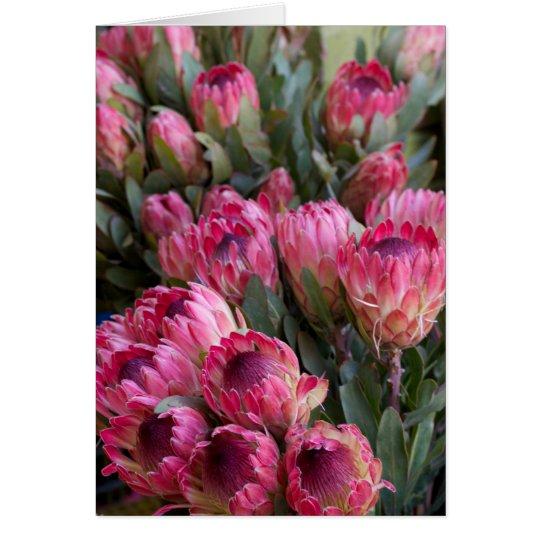 Rosa Protea Grußkarte