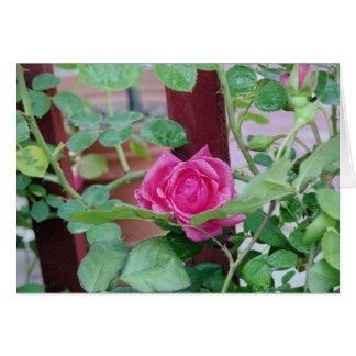 Rosa Rose 2 Karte