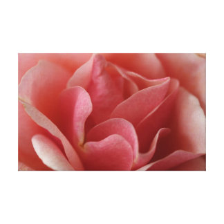 Rosa Rose Leinwand Druck
