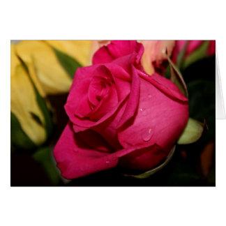 Rosa Rose mit Wasser-Tropfen Karte