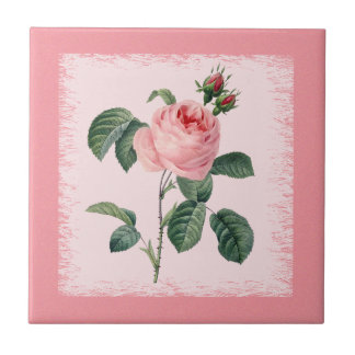 Rosa Rose Redoute Keramik-Fliese Kleine Quadratische Fliese
