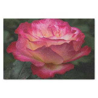 Rosa Rosen-Blühen Seidenpapier