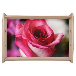 Rosa Rosen-Blume mit Blumen Serviertabletts