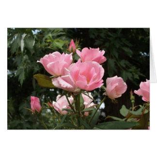 rosa Rosen im Frühling Karte