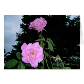 Rosa Rosen vor einem Sturm Karte