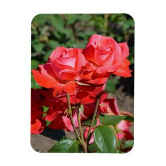 Rosa Rosendruckmagnet Vinyl Magnet