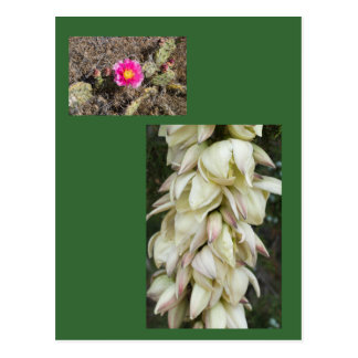 Rosa stachelige Birnen-Blumen-Geschenk Postkarte