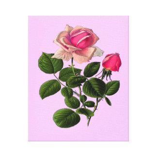 Rosa Tee-Rosen Leinwanddruck
