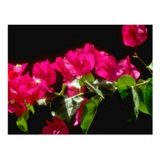Rosa tropische Blumen, Ocho Rios Blumen Postkarte